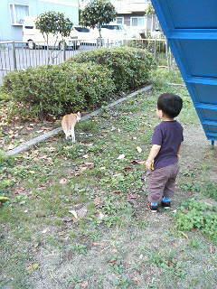 猫を追い掛ける図